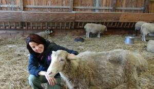 Sue at Farm Sanctuary
