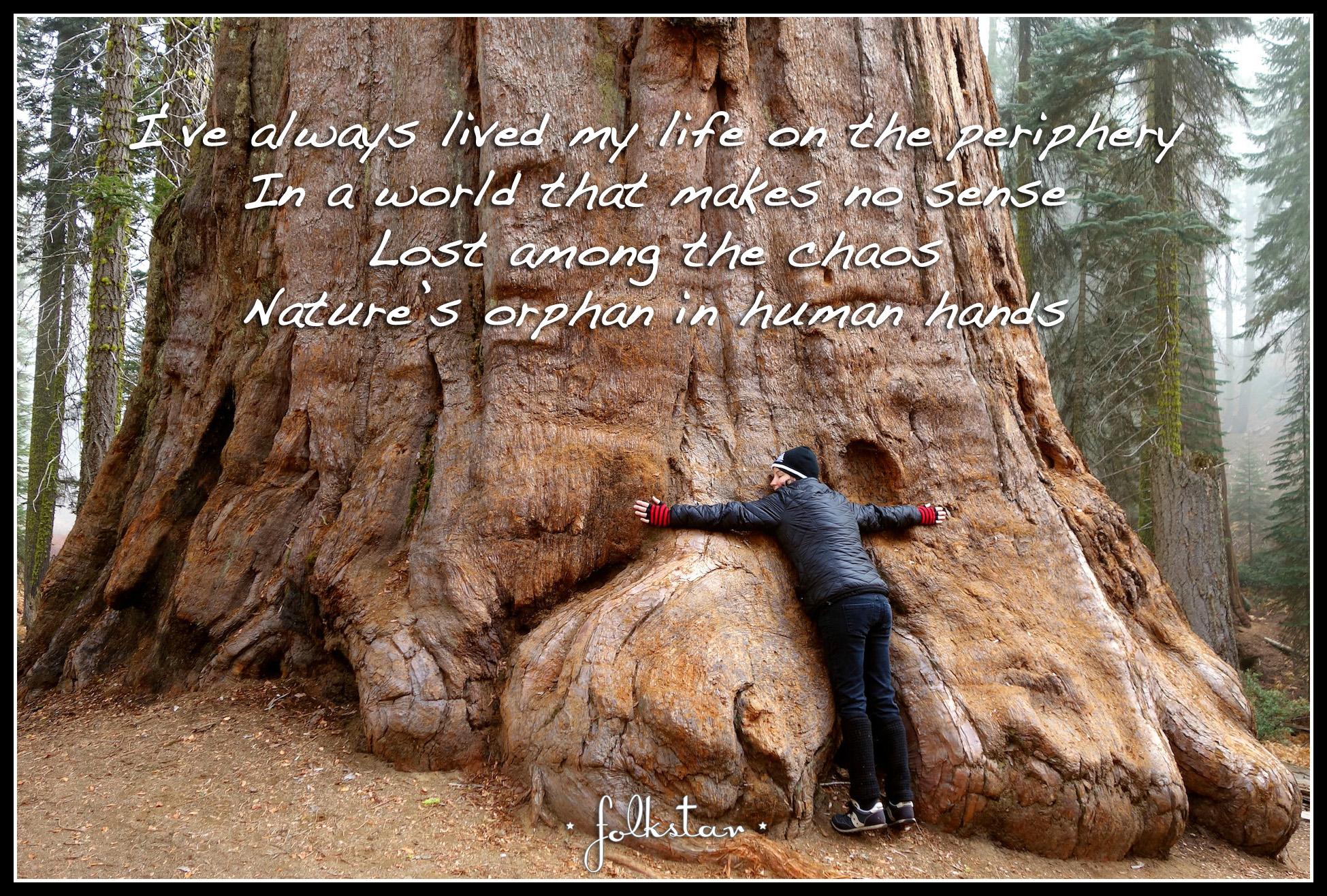 Treelines and Skylines Lyrical Snapshot - Sequoia