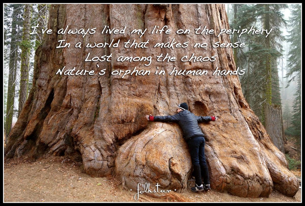Sequoia Folkstar Snapshot